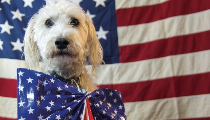 All American Dog | maxmorgan.com