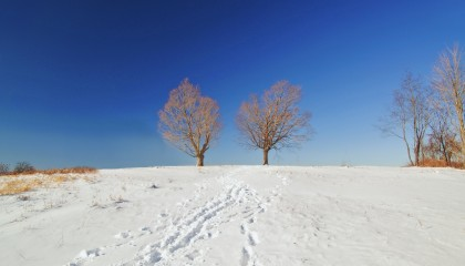 Two Trees | maxmorgan.com